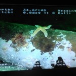starfish-search_and_recovery_rov